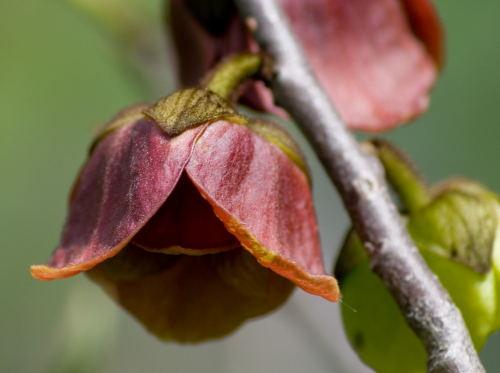 Rozwijaj�ce si� kwiaty zmieniaj� kolor